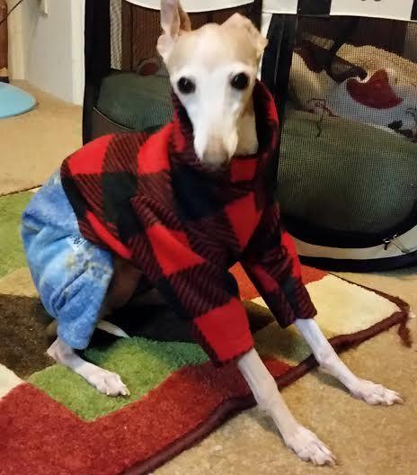 Spoiled Bratzwear Canine Originals