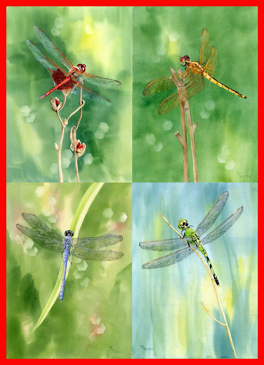 Dragonfly Collection From Original Watercolors The