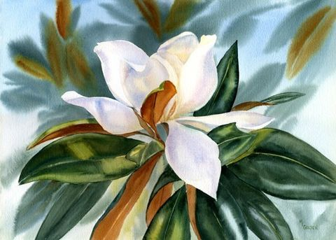Lightfilled southern magnolia blossom - The Golden Gallery